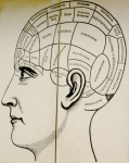 phrenology-head-2