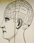 phrenology-head-2